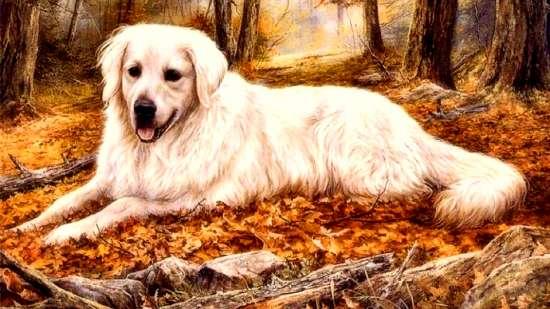 Алмазная мозаика 40x50 Белый пес среди осенней листвы